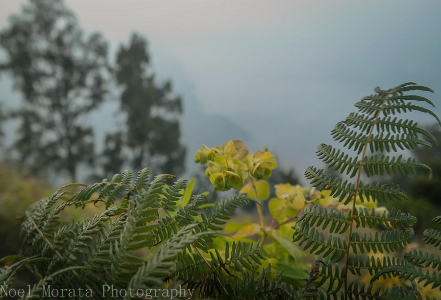 Euphorbias at the lookout point - Mt. Bromo, Indonesia