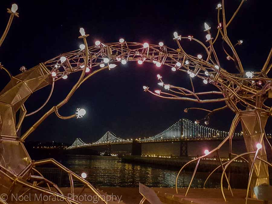 Illuminate SF - Fun and unusual activities to do in San Francisco