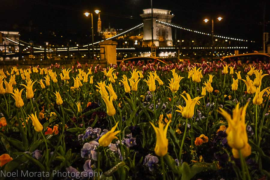 Spring annuals fronting the Chain bridge at night