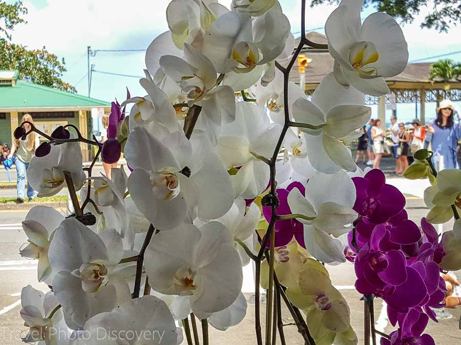 The Merrie Monarch parade and locally grown orchids