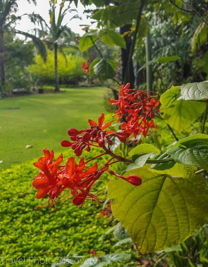 Tropical blooms Miami Beach Botanical Garden
