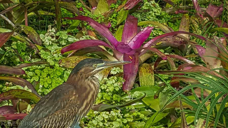 Visit Miami at Miami Beach Botanical Garden