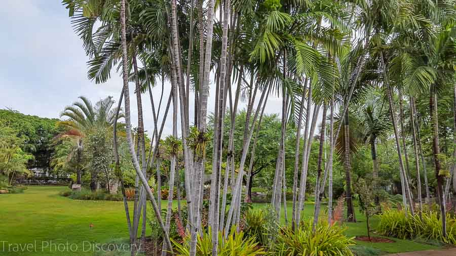 A stand of palm trees at Miami Beach Botanical Garden