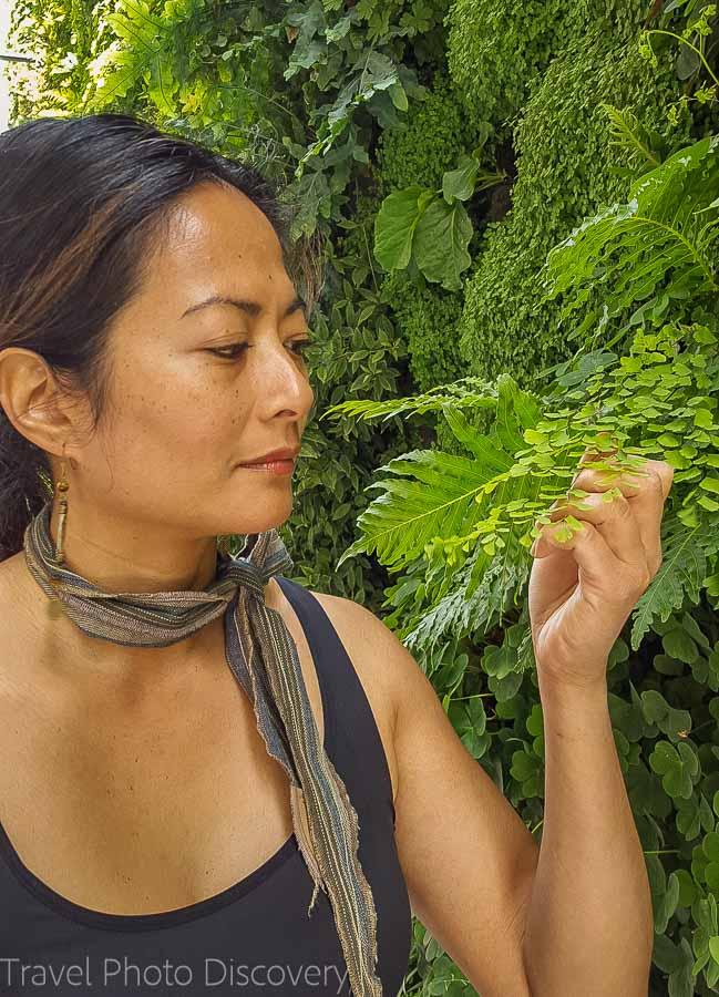 Green wall at SF Moma