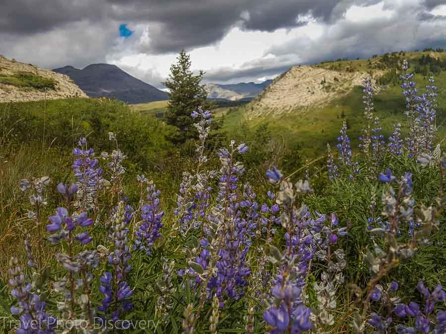 Glacier National Park Celebrating the US National Parks Centennial