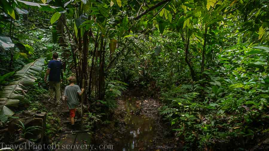 Creekside walk at a La Loma cacao plantation