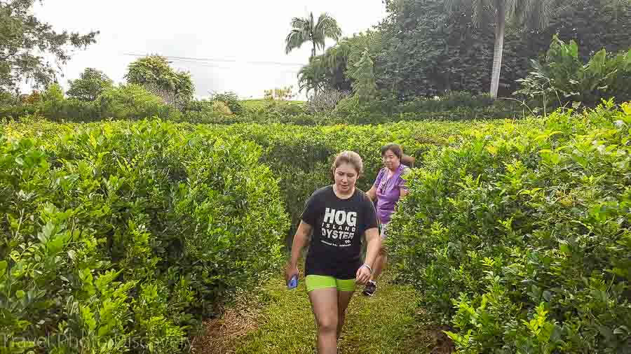 World Botanical gardens Things to do the Big Island with kids