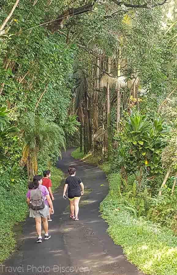 Walking through the Onomea trail to the bottom