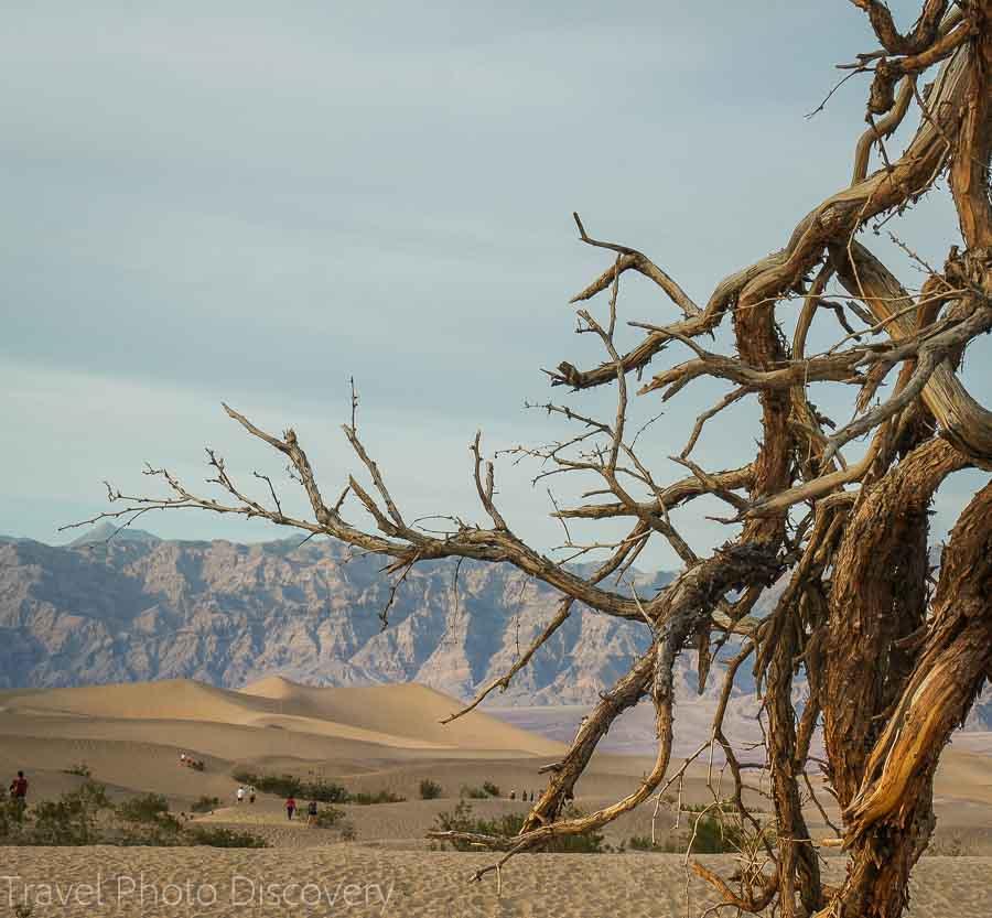 Death Valley National Park Mesquite Dunes Flats
