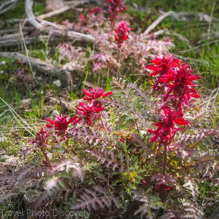 Wildflower blooms Pinnacles Exploring Pinnacles National Park