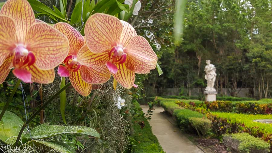 Orchid collection and gardens of Vizcaya museum