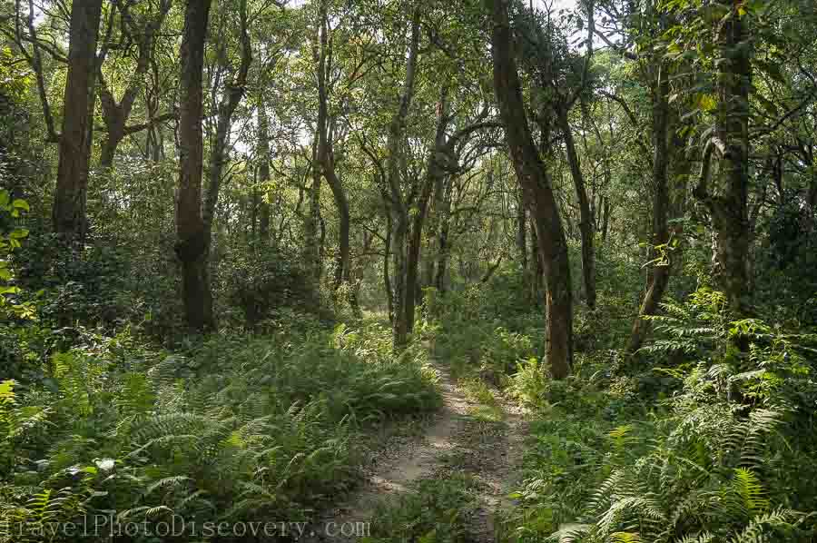 Gorgeous jungle landscape at Chitwan National park