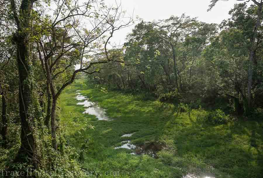 Lush marshland and meadows at Chitwan National Park