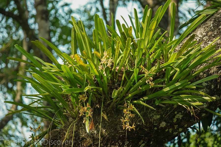 Wild orchids at Chitwan National Park