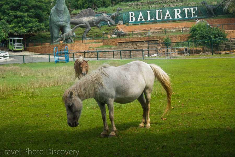 Baluarte Zoo in historic Vigan city