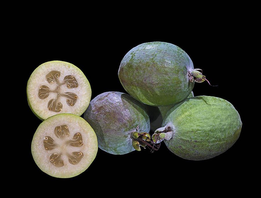 tropical fejoia fruit