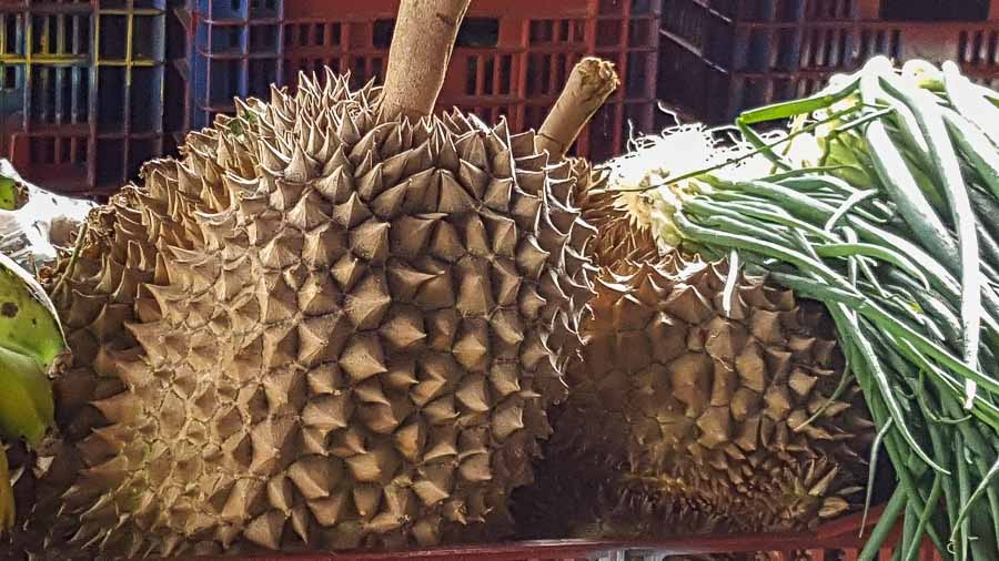 Exotic and unusual Durian fruit