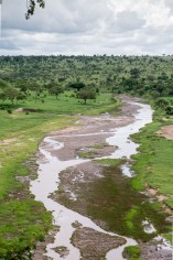 Serengeti river