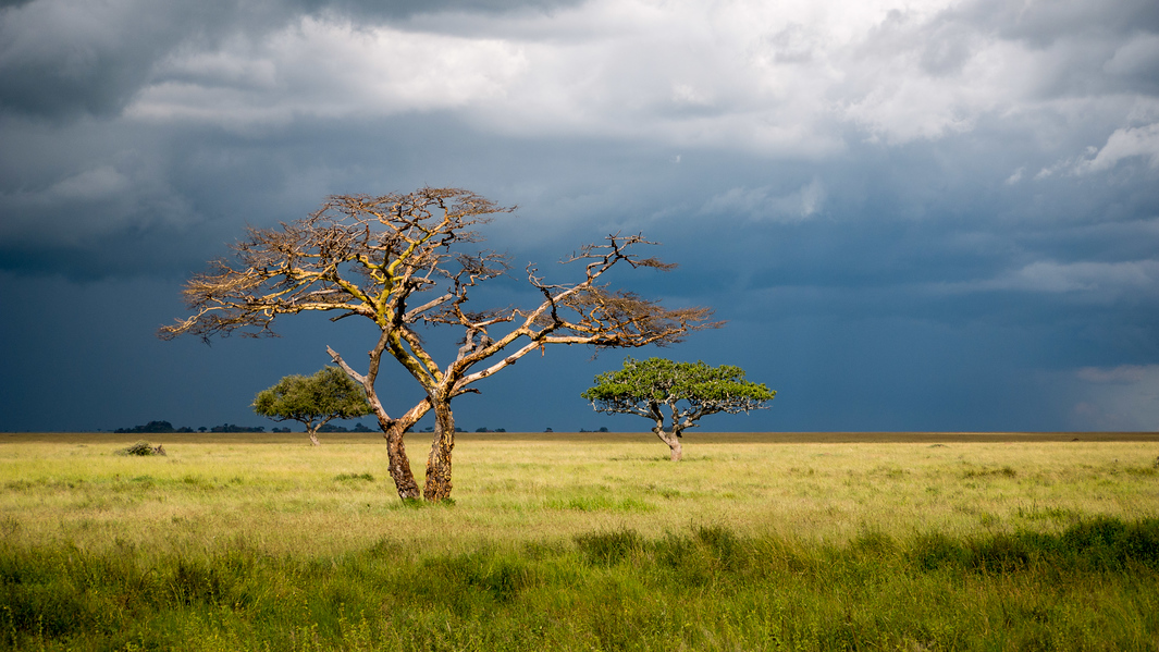 Dark storm clouds in the Serengeti