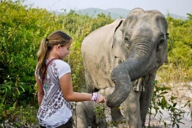 baby elephant laos