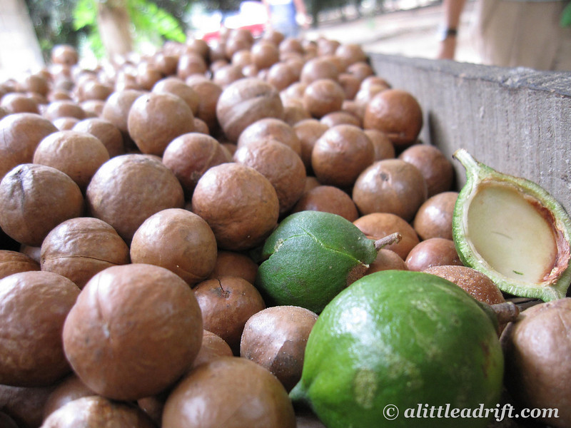 macadamia nuts  slice   expat lifestyle