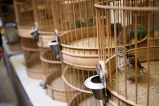 Caged birds,bShanghai, China