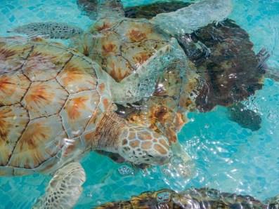 turtle shells on isla mujeres
