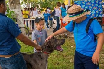 izamal dog show