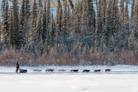 Yukon 2013 by Gary Arndt