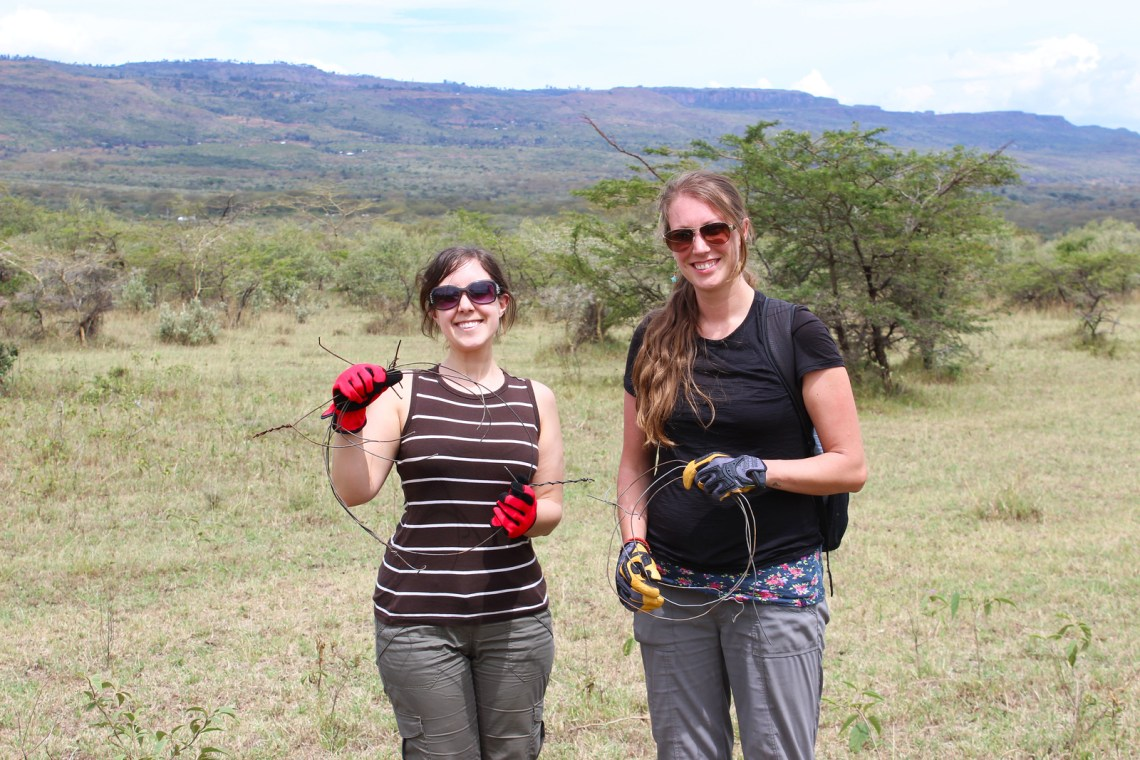 Volunteering in Kenya for Animals