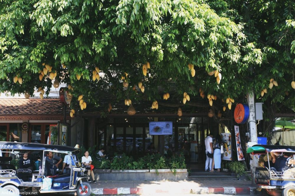 Cafe ở Chiang Mai