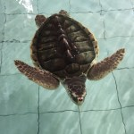 Serangan – Island of sea turtles