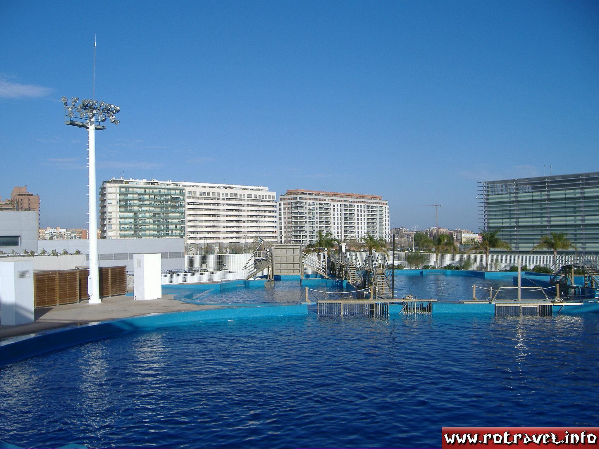The Dolphinarium (L'Oceanogràfic)