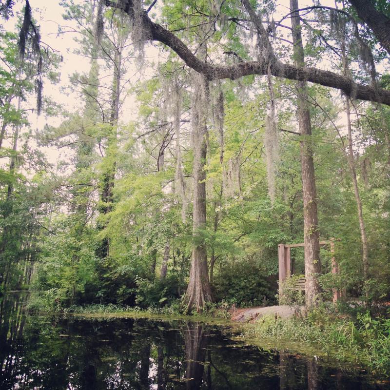 Holschaukel am Sumpf Cypress gardens