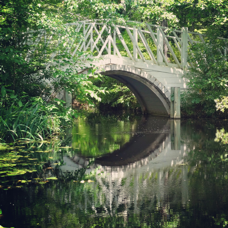 Weiße Holzbrücke in den Sümpfen Cypress Gardens