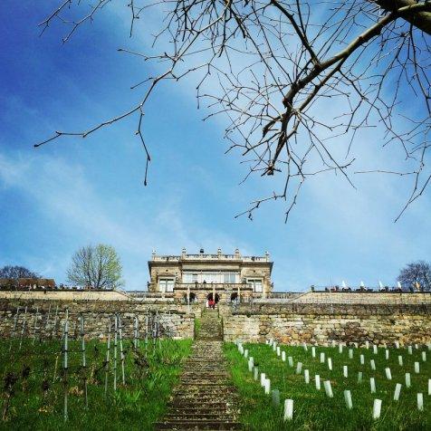 Lingner Schloss I Dresden