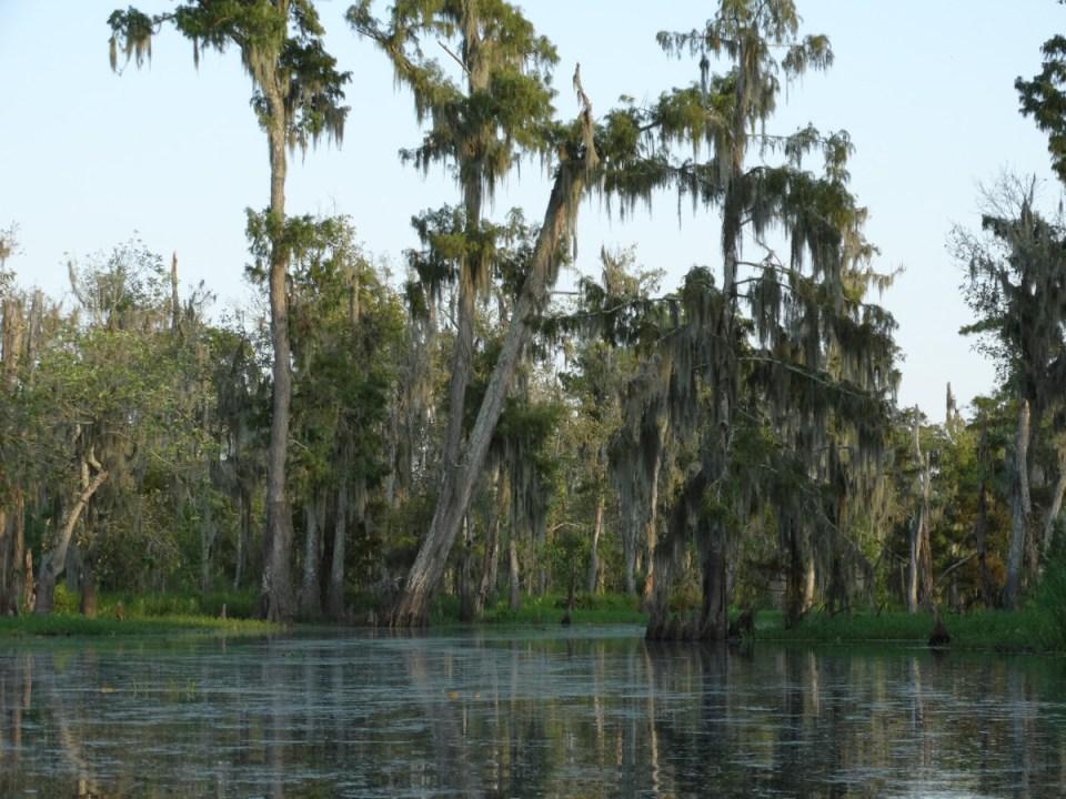 New Orleans Sümpfe mit dem Kayak