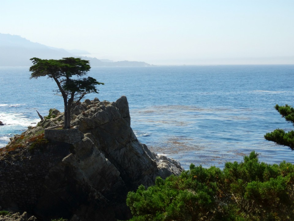 Lone Cypress Tree - 17-Mile-Drive