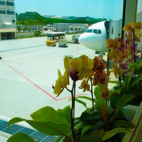JALのCAさんとの会話が弾んだ 那覇から成田の2時間半