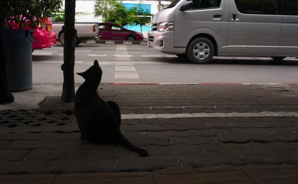 raan_kaithong_pratunam.17