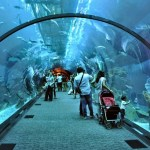 The Aquarium in Suoi Tien Theme Park