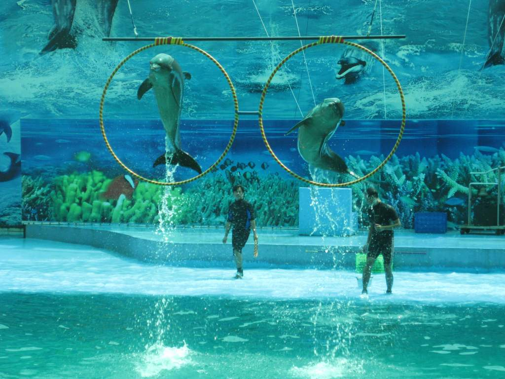 Dolphin performance in Suoi Tien Theme Park