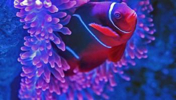 Underwater adventure in the Maldives