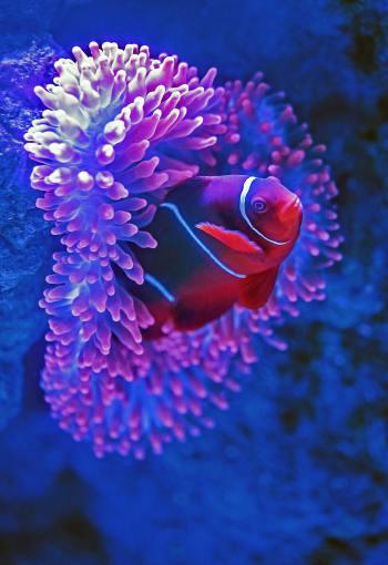 4 Underwater Adventures to Add to Your Bucket List