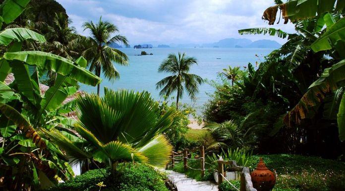 tropiki