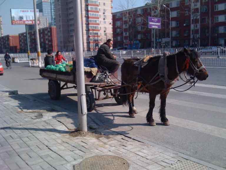 100310 Horse & cart