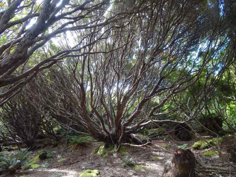 Ranui Cove