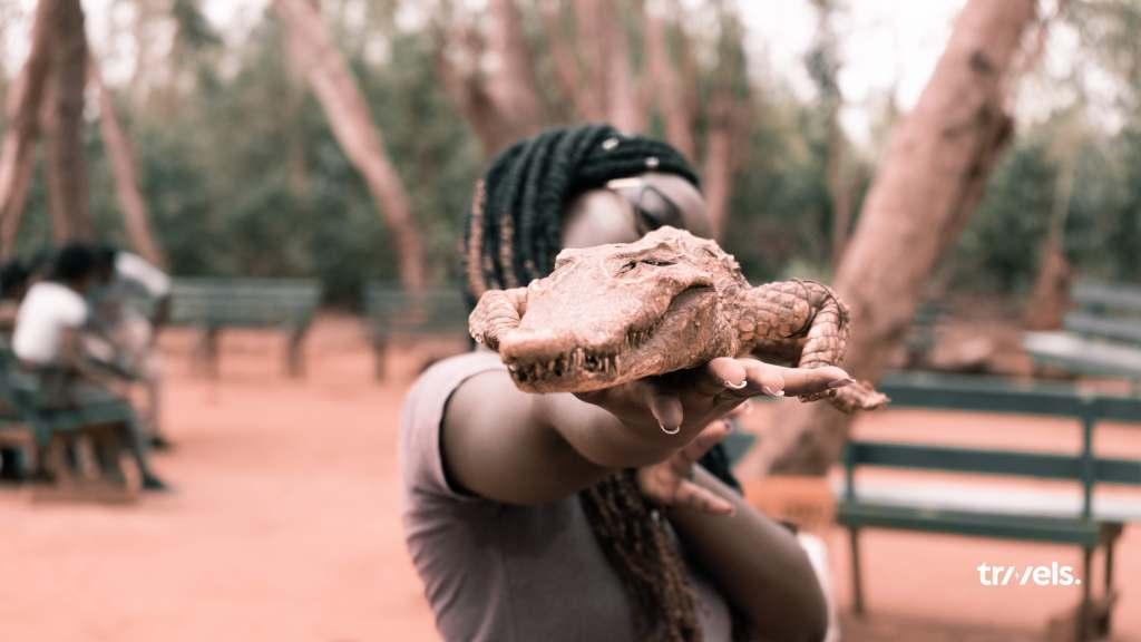 Dwarf Crocodile Alligator at Accra Zoo