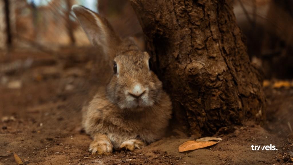 Rabbit stares into camera at Accra Zoo