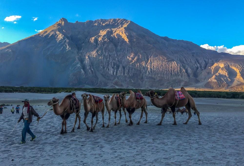 Camel ride Hunder